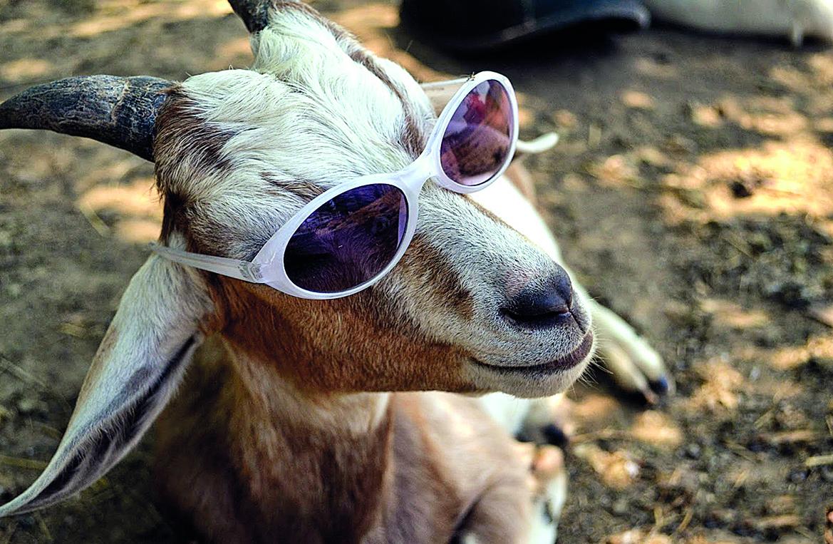 одной самых приколы фото с козой ярче