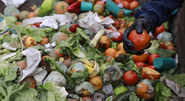 Миллиард тонн продуктов на свалку. Почему человечеству пора готовиться меньше есть