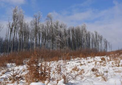 В Карпатах ожидаются сильные снегопады