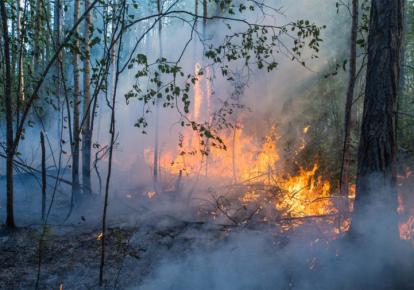 Лесные пожары в Якутии в июле