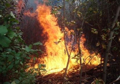 В ряде регионов будет преобладать чрезвычайный уровень пожарной опасности