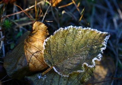 На поверхні ґрунту — заморозки 0-3°
