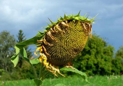 В Україні буде переважно сухо і сонячно