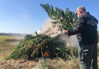 Правоохранители ликвидировали в Луганской области участок с коноплей
