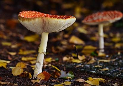 Врачи предостерегают: дикорастущие грибы могут быть опасными
