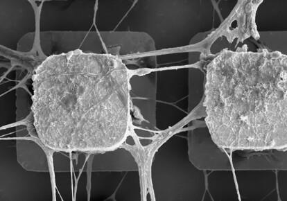 Ученые начинают внедрение живых нейронов в компьютерные микрочипы / eurekalert.org