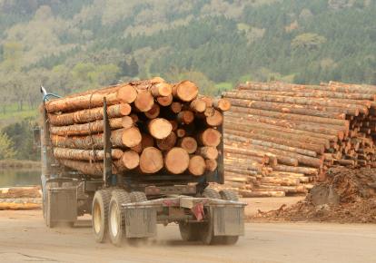 Експорт лісу-кругляка