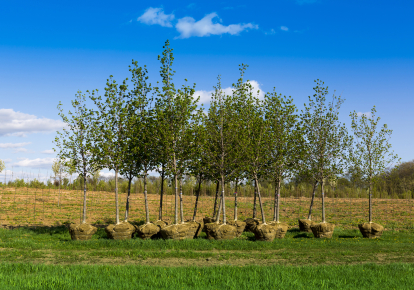 В Україні за три роки хочуть посадити мільярд дерев