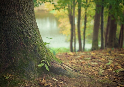 Планируется ежегодно высаживать около 7 000 гектаров лесных массивов