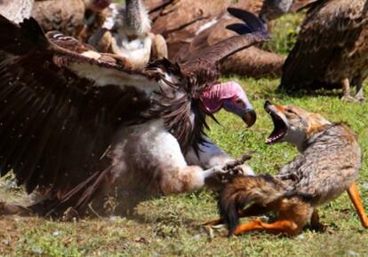Фото: comicvine.com