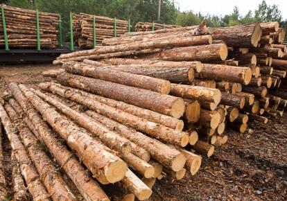 Украина должна будет отменить принятый в 2015 г. запрет на экспорт необработанной древесины