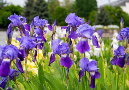 Кабмін схвалив створення двох нових об'єктів природно-заповідного фонду / Shutterstock