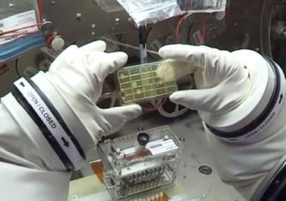 На МКС обнаружили неизвестные науке микробы