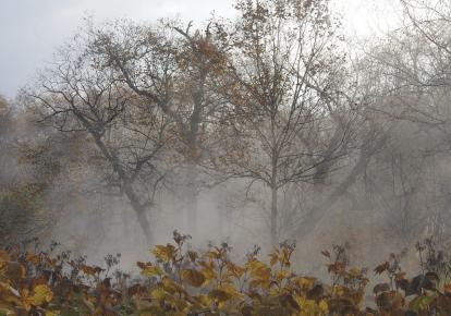 Погода в Україні: сьогодні без опадів, місцями мороз