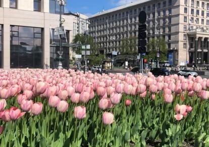 На центральних площах Києва висадили тюльпани на честь героїв Небесної сотні