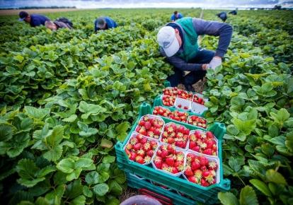 Уряд Польщі працює над новими правилами працевлаштування іноземців