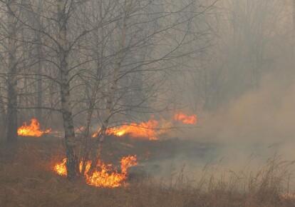 Законодательством запрещено самовольное выжигание растительности или ее остатков