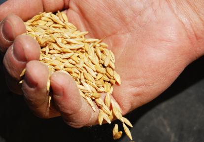 AB InBev Efes Украина использует продукцию местных фермеров, поддерживая тем самым сельскохозяй‑ственный бизнес и уменьшая углеродный след