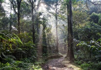 Тропічний ліс