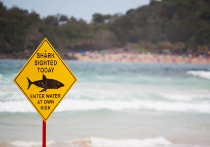 "Предупреждающий знак ""Акулы на пляже"""
