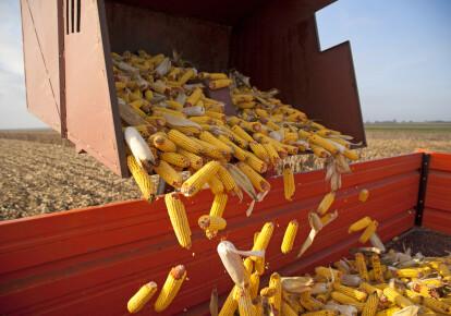 С помощью простой перезагрузки базового ряда культур РФ может существенно нарастить кукурузный экспорт