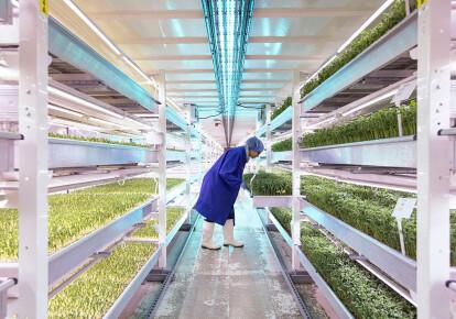 Подземная ферма. Фото: Getty Images