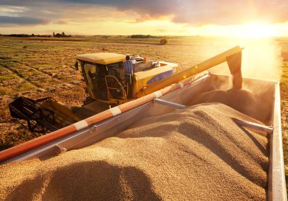 В Україні зібрали найбільший урожай ранніх зернових за всю історію країни