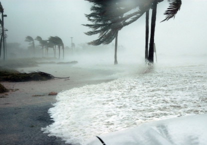 Сильні вітри повалили дерева в прибережних районах
