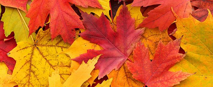 Пять ароматов, превращающих осень в волшебство