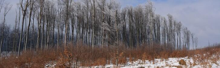 ГСЧС предупредила о снегопадах и лавинах в Карпатах — установлен четвертый уровень опасности