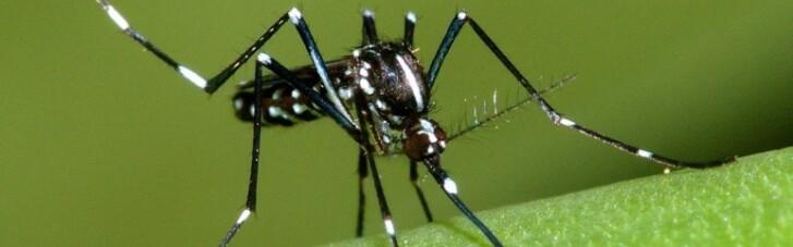 Армія мутантів. В Америці випустять на волю комарів-вбивць