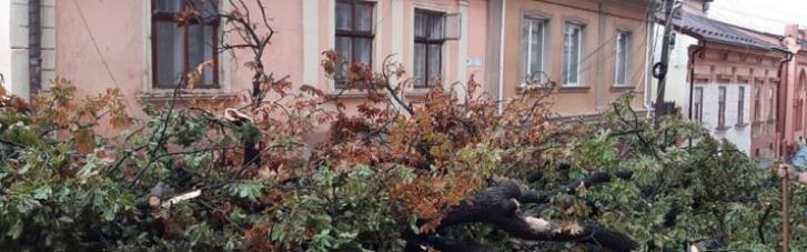 У Чернівцях негода затопила вулиці і повалила дерева (ФОТО, ВІДЕО)