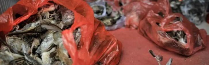 """Експерти ВООЗ знайшли """"важливі докази"""" по COVID-19 на ринку в Ухані"""