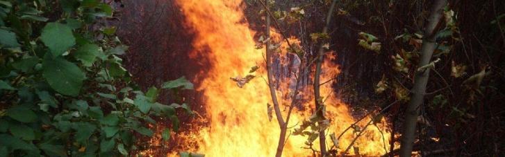 Масштабна пожежа на Сумщині: вогнеборцям вдалося врятувати ліс і житловий сектор (ВІДЕО)