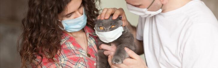 Popular Science: Может ли ваша кошка заразить вас коронавирусом