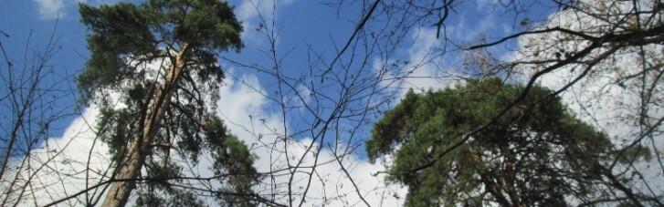 Синоптики розказали, де у вівторок чекати дощів (КАРТА)