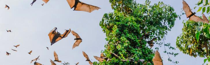 Ебола, малярія, коронавірус. Як людство допомагає епідеміям