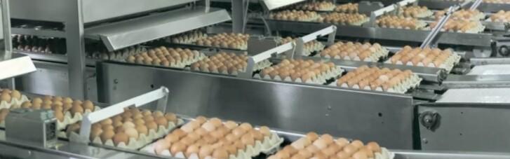 Давление НАБУ на агрохолдинги может привести к росту цен на яйца, - Ассоциация поставщиков торговых сетей