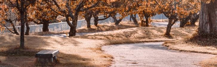 ДСНС назвала регіони, де найближчим часом буде сильний вітер і заморозки
