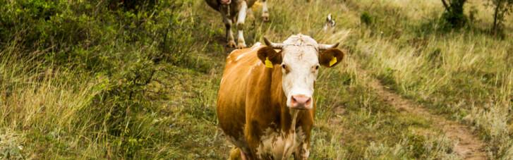 Котлета или будущее. Почему в ООН решили пристыдить мясоедов