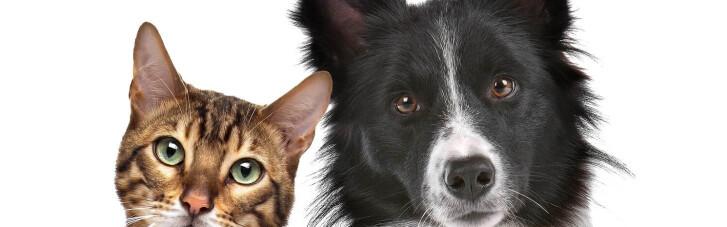 Опрос показал, как украинцы видят свою ответственность перед домашними животными