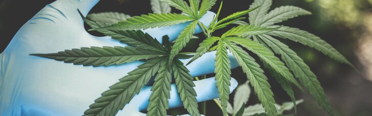 У Мексиці повністю легалізували марихуану