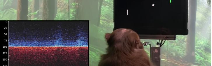 У Маска показали, як мавпа з чіпом в мозку грає у відеогру (ВІДЕО)