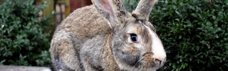 """Двое россиян изнасиловали девушку, заманив ее предложением """"посмотреть на кролика"""""""