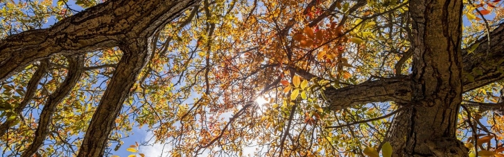 Якою буде осінь в Україні та коли настане зима: прогноз синоптиків