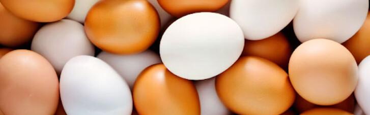 НАБУ обвинили в падении производства яиц в Украине на 16%