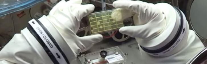 Космические фермы. На МКС обнаружили неизвестные науке микробы