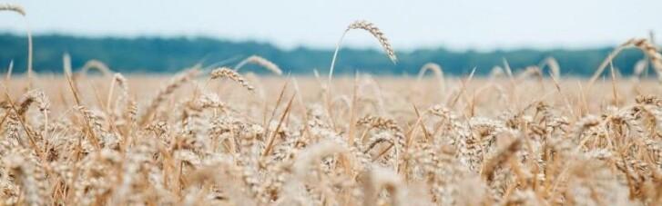 Україна заборонила ввозити з Росії пшеницю, масло і папір