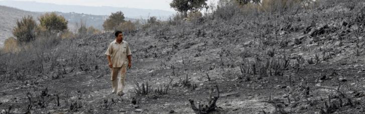 Лісові пожежі на Близькому Сході: в Сирії стратили 24 засуджених за підпал