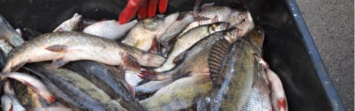 Ботулизм на крючке. Какую рыбу можно есть в Украине